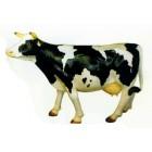 kleine schwarz weiß gefleckte Kuh