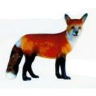 stehender Fuchs