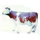 braun weiße Milchkuh lebensgroß