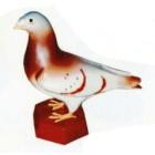 braun weiße Taube mit braunem Fuß