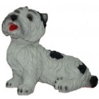 Hund West Highland Terrier