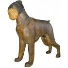 belgischer Griffon Hund groß