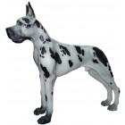 Hund, deutsche Dogge gefleckt