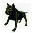 schwarzer großer Bullterrier Kampfhund