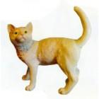 beige stehende Katze