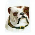 Kopf English Bulldog