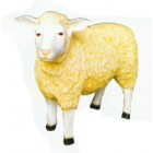 Schaf lebensgroß